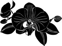 Orchids flowers. It is isolated flora vector illustration