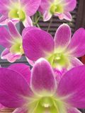 Orchids flowers. Orchid flowers bloom in the garden Royalty Free Stock Photos