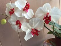 Orchids. Flowers spring relax beautiful Stock Photo
