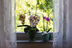 Orchids. / Flowers on the windowsill stock image