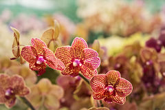 Orchids in focus at a farmers market. Royalty Free Stock Image