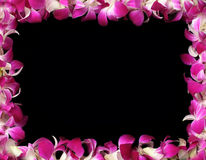 Orchids frame. With a black background stock image