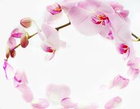 Orchids frame. Pink petals and pink orchid around center Stock Photography