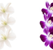 Orchids frame. Purple and white orchids frame. Branch on white background Stock Photos
