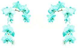 Orchids frame turquoise Stock Images