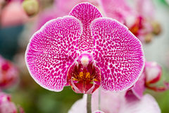 Orchids in the garden Stock Image