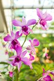 Orchids in the Garden, Beautiful Flower from the Forrest stock photos
