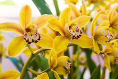 Orchids in a garden Stock Image