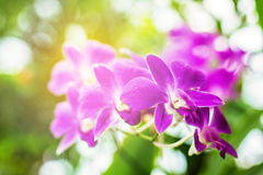 Orchids in the garden Royalty Free Stock Photo