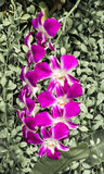 Orchids in Garden Stock Photo