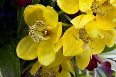 Orchids in garden setting Stock Photos