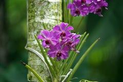 Orchids garden Singapore National Orchid Garden Singapore. Singapur National Orchid Garden Singapur Orchideen garten Stock Photography