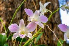 Orchids in the garden in spring for orchids stock photo