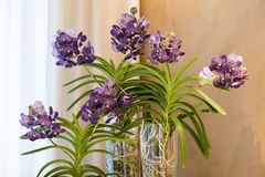 Orchids in glass bowl Stock Photo