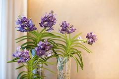 Orchids in glass bowl Stock Photography