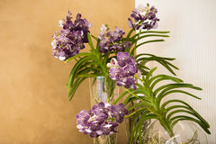 Orchids in glass bowl Royalty Free Stock Photo