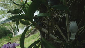 Orchids hanging from the tree close-up stock video footage