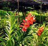 Orchids i trädgården Fotografering för Bildbyråer