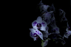 Free Orchids In Dark Stock Photos - 91150163