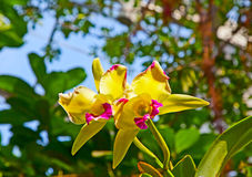 Orchids In The Botanical Garden Royalty Free Stock Photo