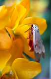 Orchids and insect Royalty Free Stock Photography