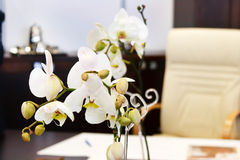 Orchids in interior Stock Photography