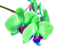 Orchids on isolated background. beautiful flower branches orchids on white background Royalty Free Stock Image