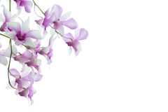 Orchids isolated on white background. Orchids flower isolated on white background Stock Photo