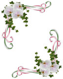 Orchids and ivy border corner design. Ivy, white orchids, flowers image and illustration composition for background, border, frame, wedding invitation or Royalty Free Stock Image