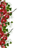 Orchids and Ivy Floral Border Stock Photo