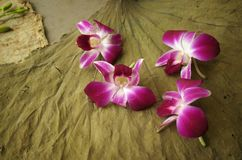 Orchids and leaf. Magenta orchids scattered on large dry leaf Stock Photography