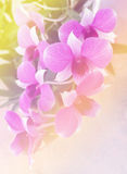 Orchids with Leaves Vintage Style Royalty Free Stock Images