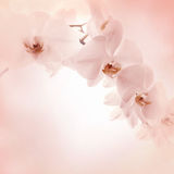 Orchids on light background Royalty Free Stock Images