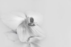 Orchids on light background Stock Photos