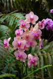 Orchids in Loro Park Royalty Free Stock Photography