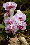 Orchids in Loro Park Royalty Free Stock Photo