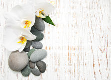 Orchids with massage stones Stock Image