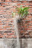 Orchids mot en röd tegelstenväggbakgrund royaltyfri foto