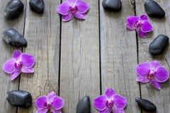Orchids och brunnsortstenar gränsar Royaltyfria Bilder