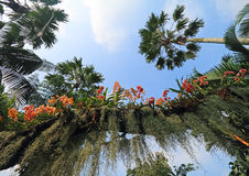 Orchids among palms tree Royalty Free Stock Photo