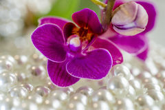 Orchids and pearls. Purple orchid and pearls.macro Stock Photo