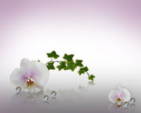 Orchids and pearls Wedding Invitation. Image and illustration composition white orchids, ivy, pearls design element for Valentine or wedding invitation greeting Stock Photo