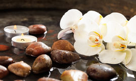 Orchids and pebbles in water background. Spa concept Royalty Free Stock Image