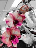 Orchids. Pink orchids in the office Royalty Free Stock Photography