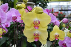 Orchids stock photography