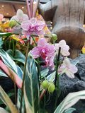 Tropical orchids in planting stock photo