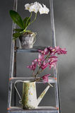 Orchids in pots on a metal stepladder Stock Photos