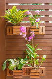 Orchids in pots near the wall Royalty Free Stock Image