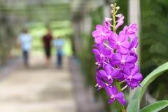 Orchids purple Stock Images