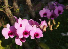 Orchids with romantic background Stock Image